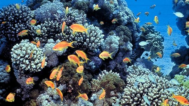 Coral reef 620.jpg